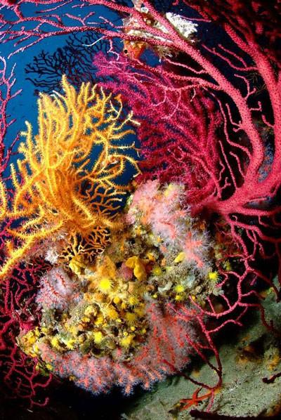 Unterwasserwelt Korsika