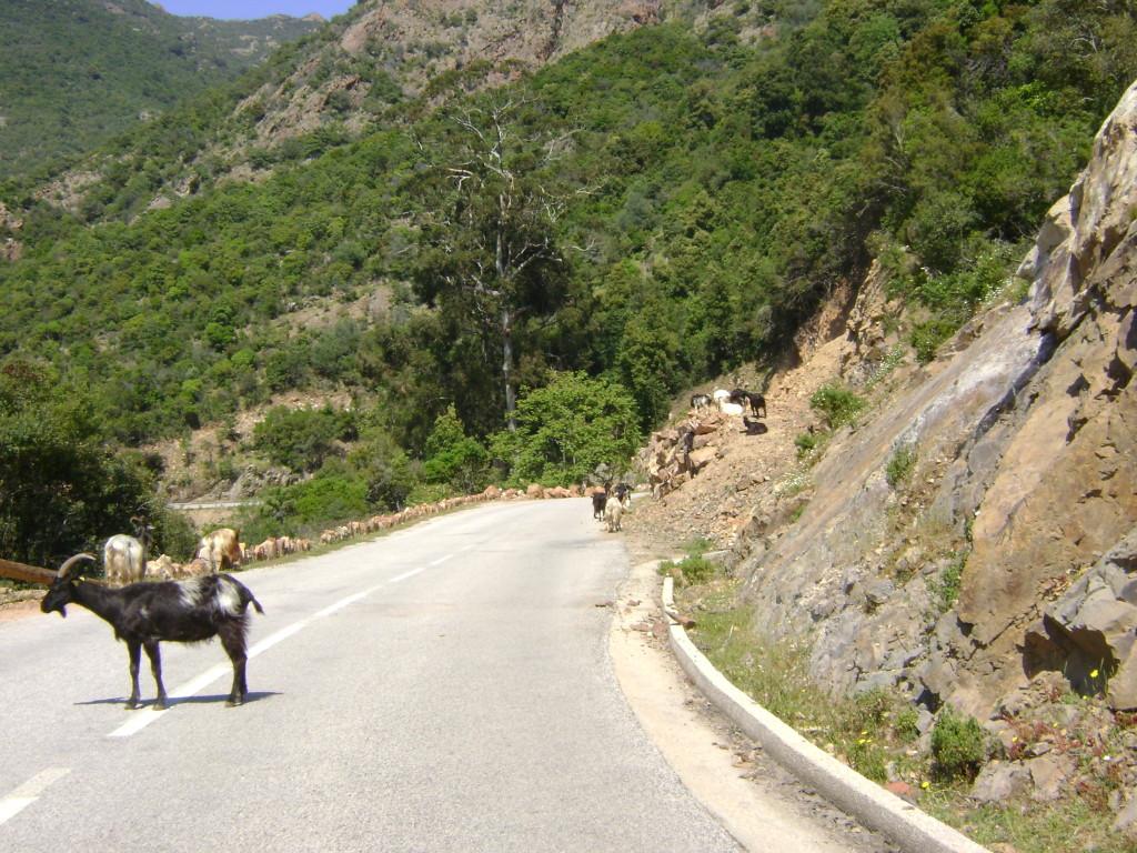 Tierwelt Korsikas