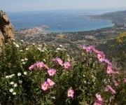 Macchia auf Korsika