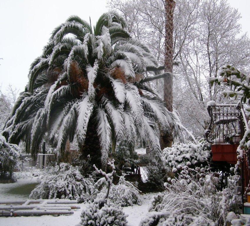 schneebedeckte Palme