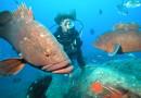 Unterwasserwelt Lavezzi-Archipel