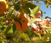 Der Fruchtgarten in Avapessa