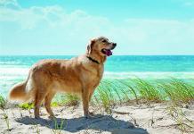 Korsika Urlaub mit Hund