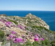 Frühling auf Korsika