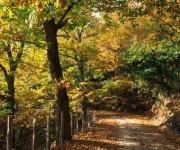 Castaginiccia - Kastanienhaine überall